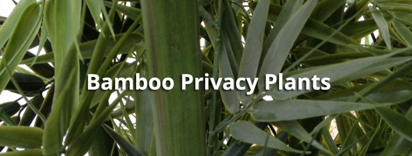 Artificial Bamboo Privacy Plants