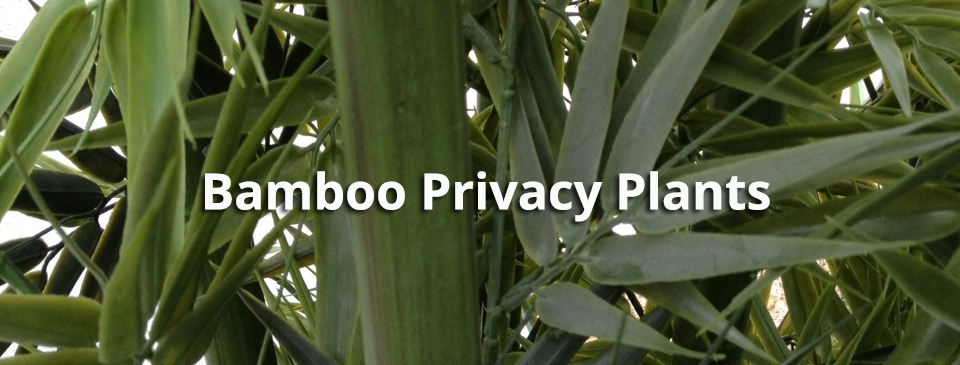 Bamboo Privacy Plants For Any Space Artificial Plants
