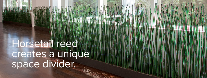 Artificial Equisetum and Horsetail Reeds for Use as Privacy Screens