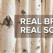 Birch Branches for Decorating and Delineating Spaces