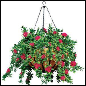 azalea-hanging-basket