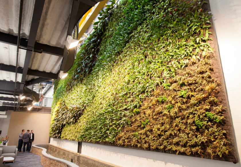 Hospitality Designers: Zero-Care Plant Ideas for Your Green Spaces ...