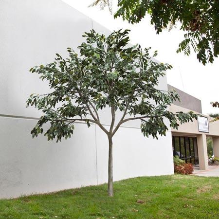 Replica UV-Rated Ficus Tree