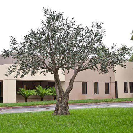 Replica UV-Rated Olive Tree