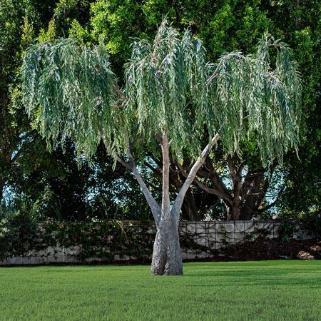Replica Willow Tree